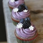 Blueberry Cupcakes | The Little Epicurean